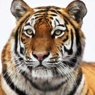Mr.Tiger